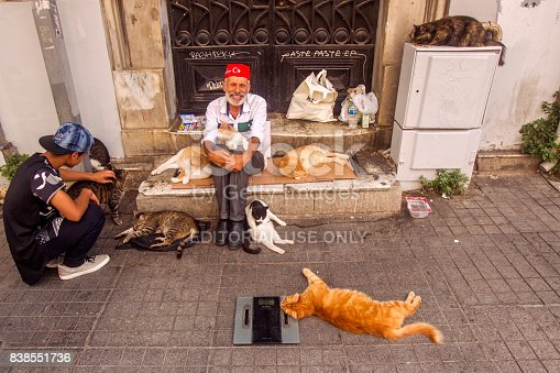People like and feed cats at istiklal street of beyoglu istanbul turkey