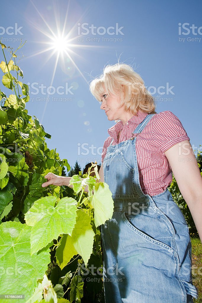 People Occupation Farmer royalty-free stock photo