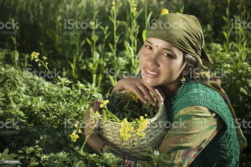 People of Himachal Pradesh: young rural woman in green farm royalty-free stock photo
