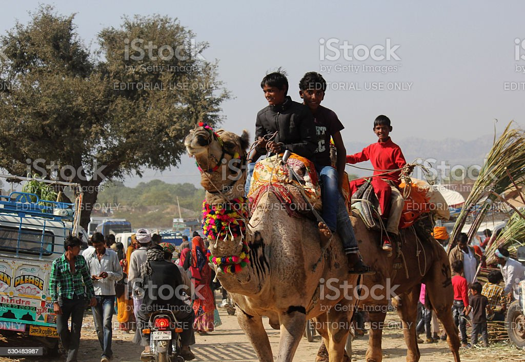 People on a Camel stock photo