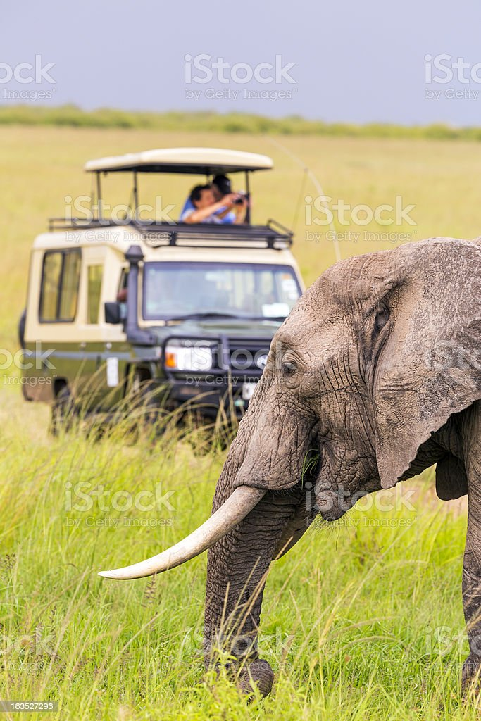 People on a safari viewing an elephant stock photo