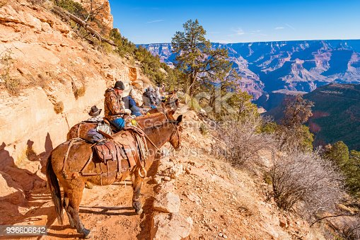 Group of tourists take part in a mule ride adventure tour led by rangers on the Bright Angel Trail in Grand Canyon National Park, South Rim, Arizona, USA.