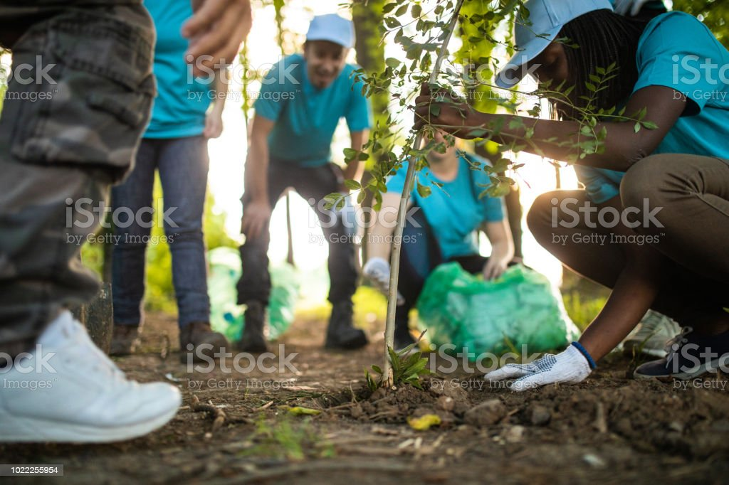 People Planting Tree In Park stock photo