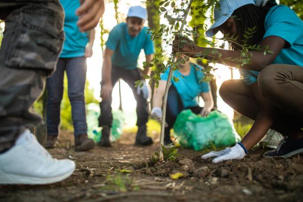 people planting tree in park - piantare foto e immagini stock