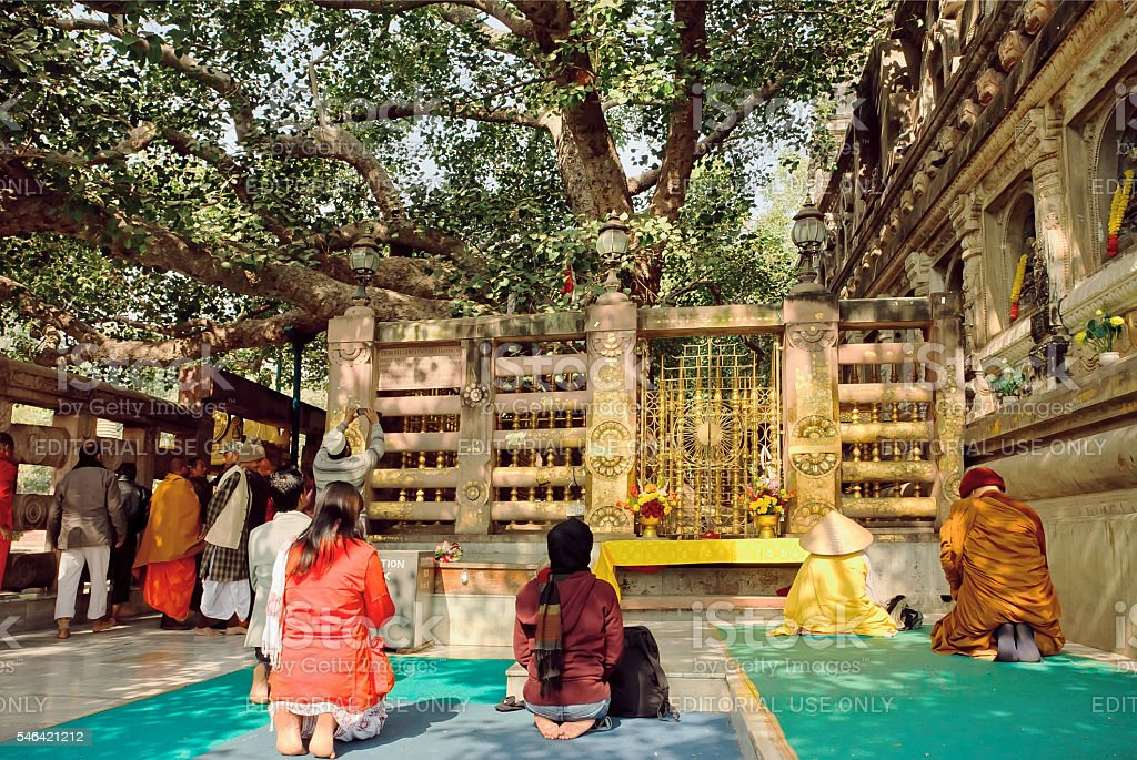 People praying under the green Bodhi tree stock photo
