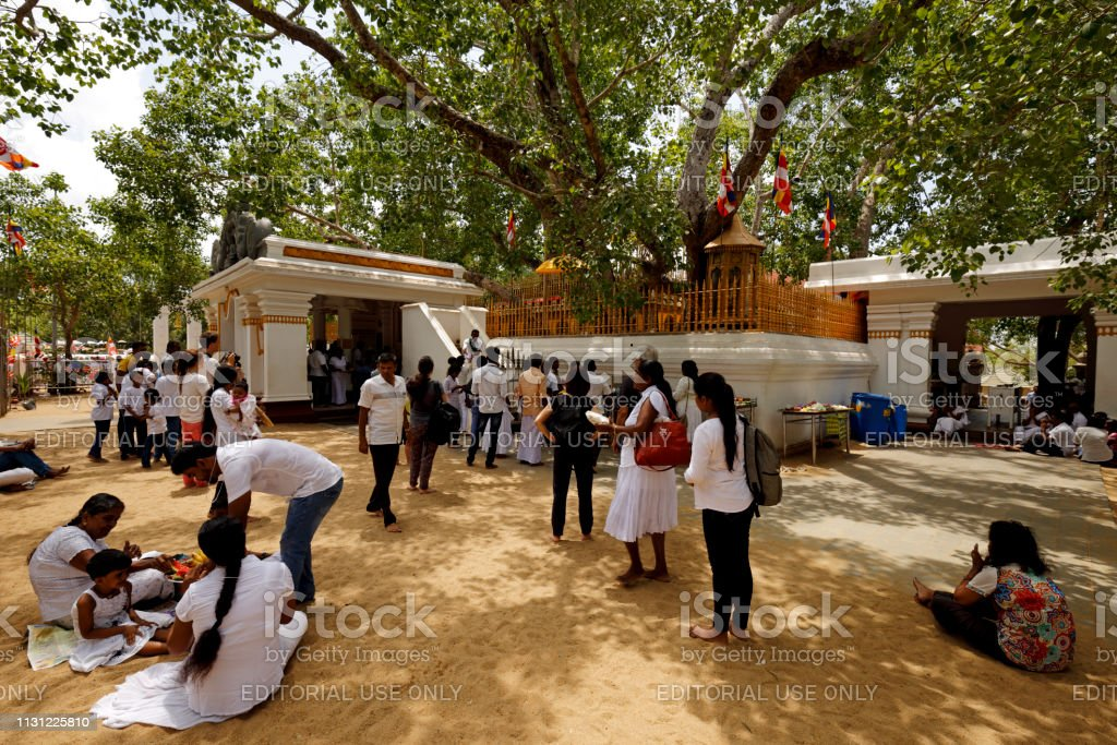 People relaxing under the sacred tree in Sri Lanka stock photo
