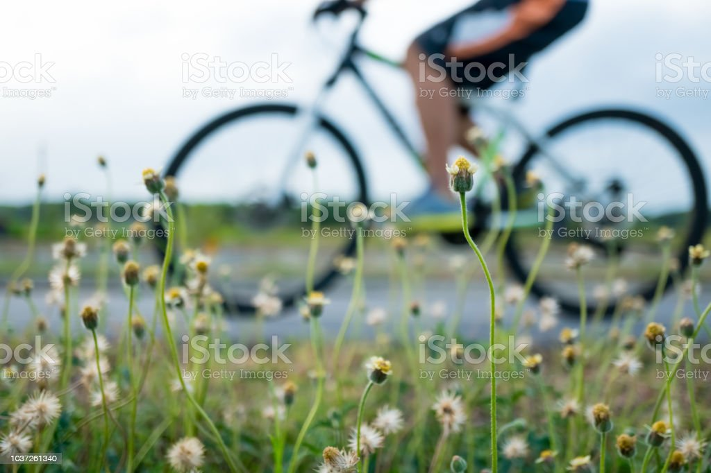 People ride bicycle in evening with sunset and sunlight.Selective focus a little flower beside road in front. стоковое фото