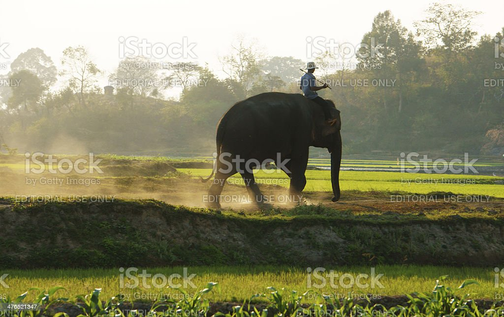 People ride elephant on path at countryside stock photo