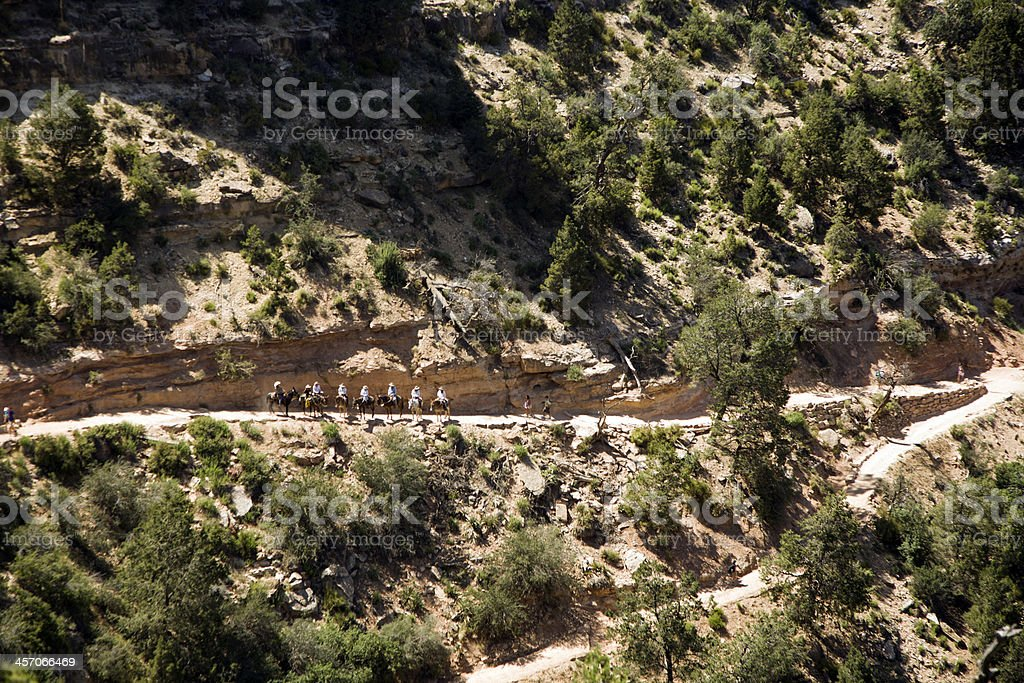 people riding down the Bright Angel trail stock photo