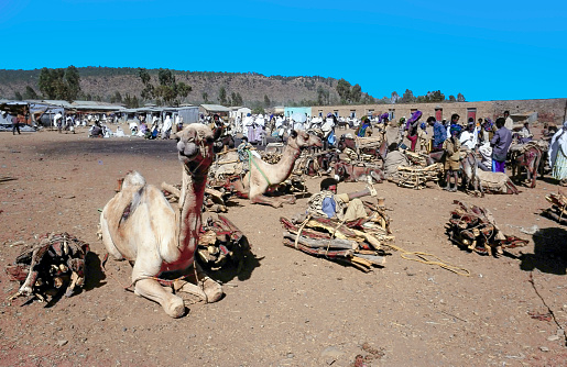 people sell firewood in the high lands of Ethiopia and arrive at the market with camels