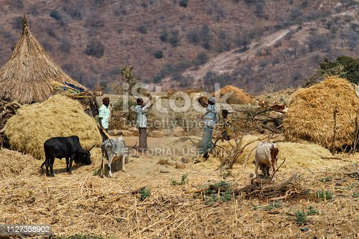 istock people separating the wheat in Aksum in Ethiopia 1127358902