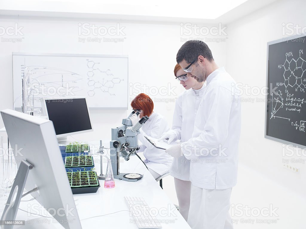people studying in a chemistry lab royalty-free stock photo