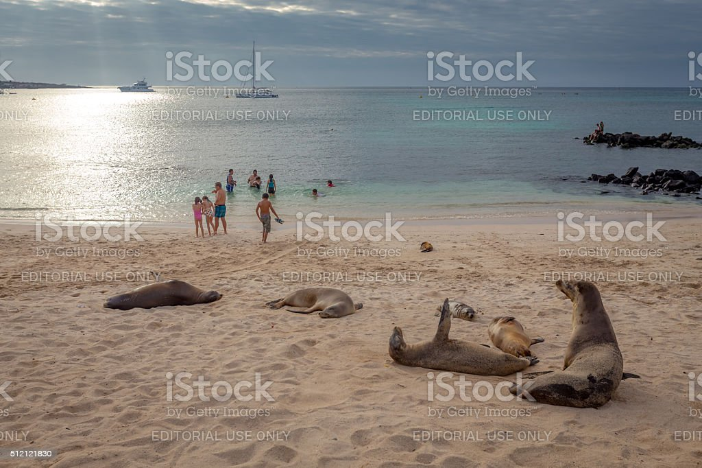 People swim and enjoy a beautiful beach with sea lion stock photo
