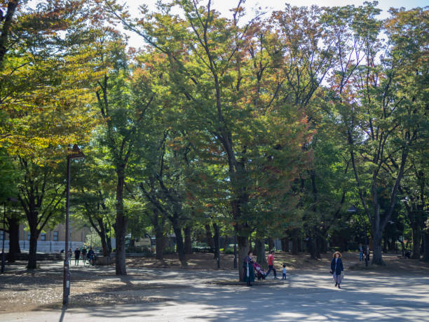 People walk in Ueno Park.  Ueno Park is a large public park next to Ueno Station in central Tokyo stock photo