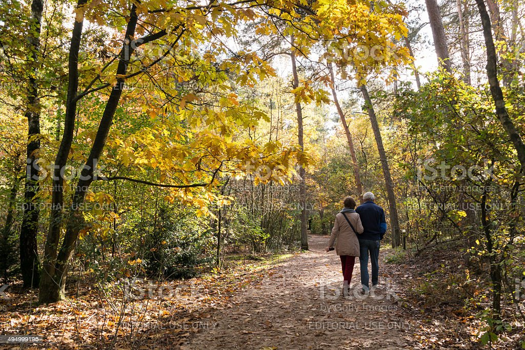 People walking in woods, fall in Netherlands stock photo