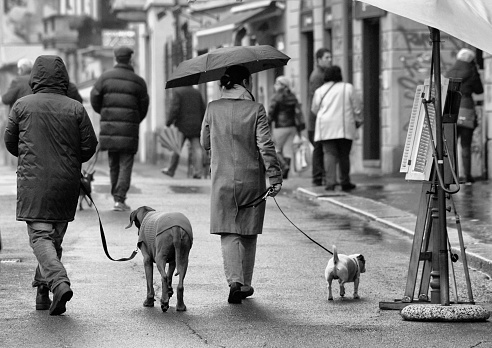 people walking with the dog in a rainy day