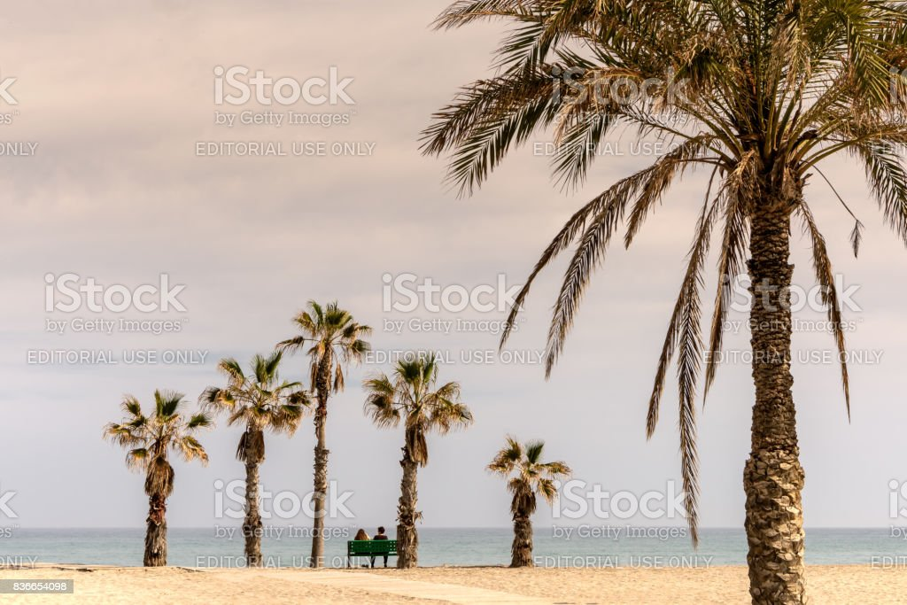 People watch the ocean from bench under unusual palm tree formation in Alicante, Spain stock photo