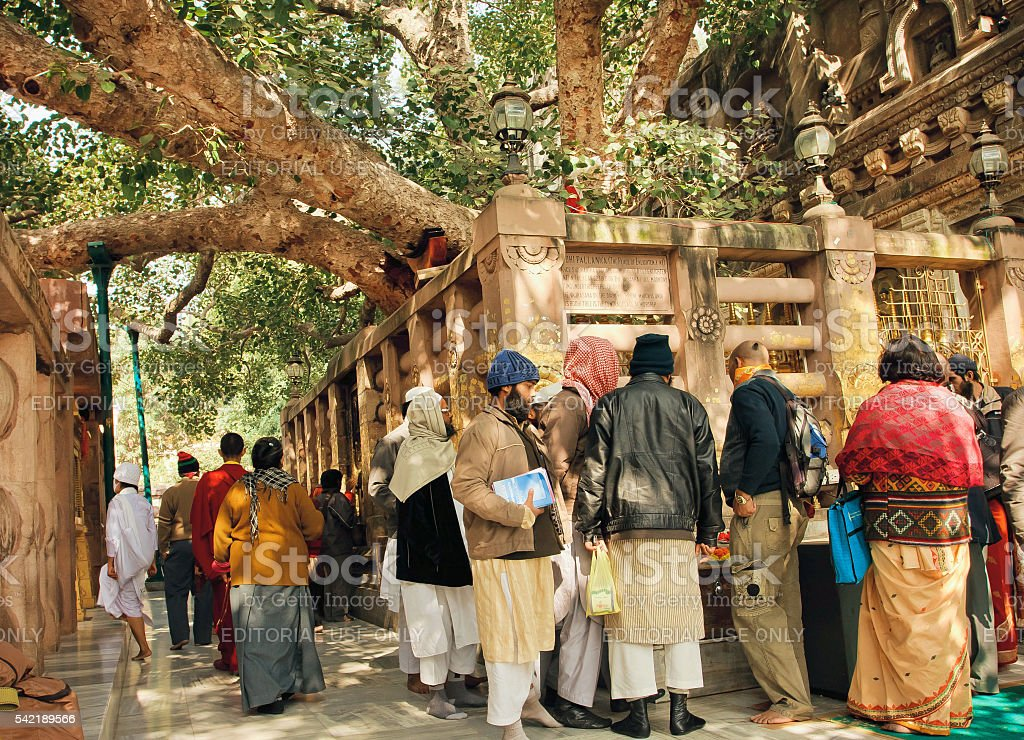 People watching tree of Gautama stock photo