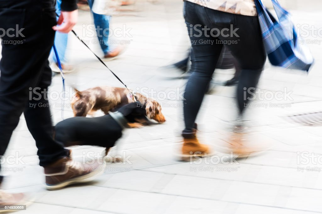 people with dogs in the city in motion blur