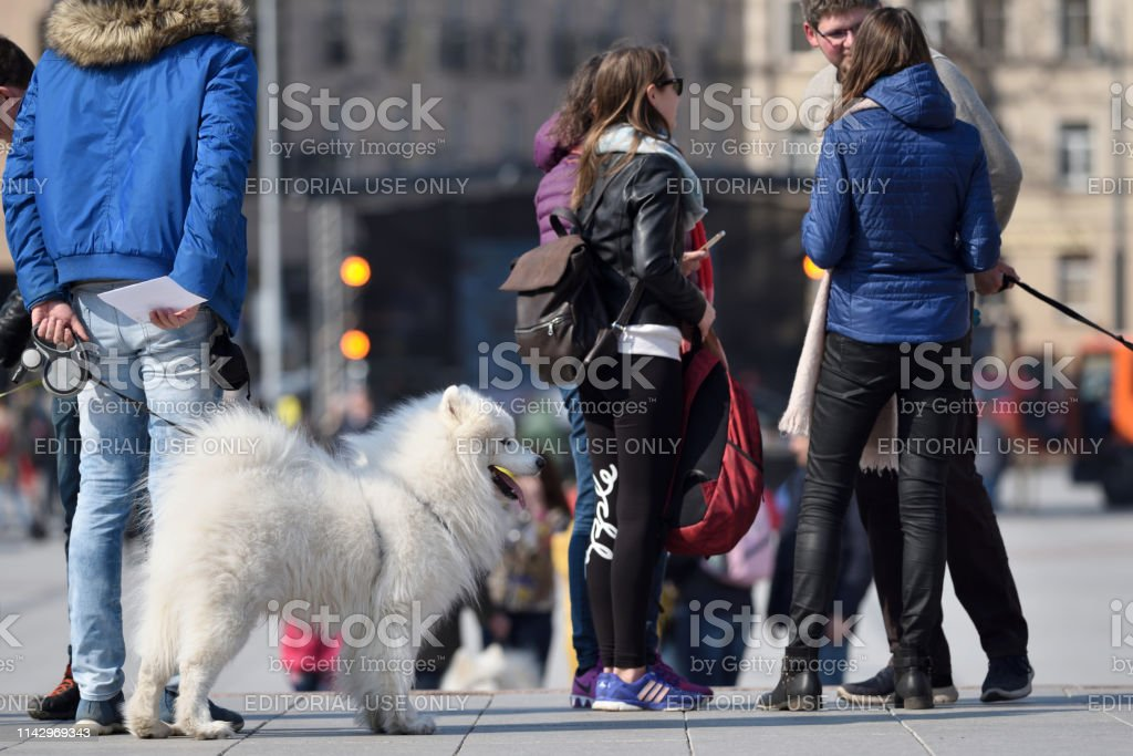 Unidentified people with dogs in Vilnius Old Town on April 06, 2019...