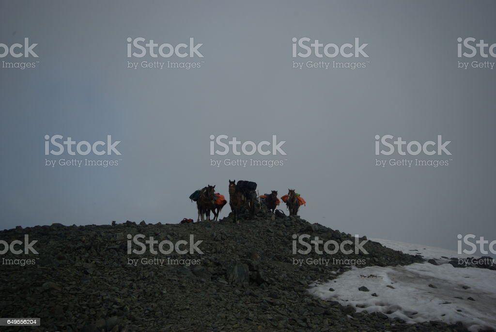 People with horses. Horses walk and graze. stock photo