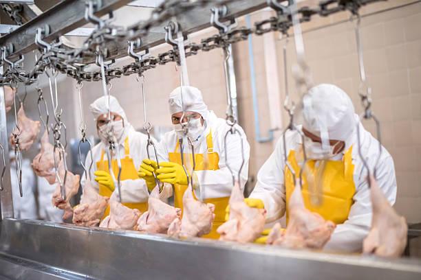 people working at a chicken factory - livsmedelstillverkningsfabrik bildbanksfoton och bilder
