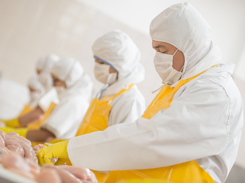 People working at a food factory doing quality control on some chickens