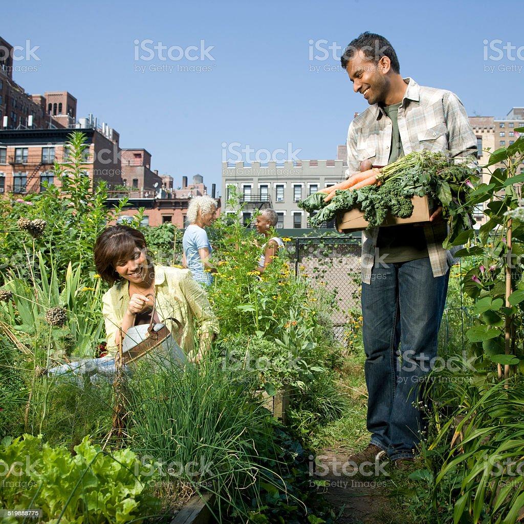 Pessoas trabalhando em um Jardim comunitário - foto de acervo