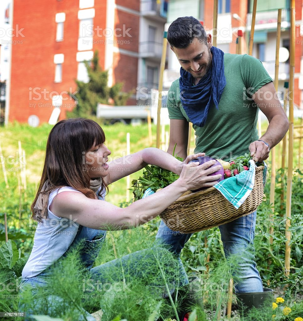 People Working in a Urban City Vegetables Garden stock photo