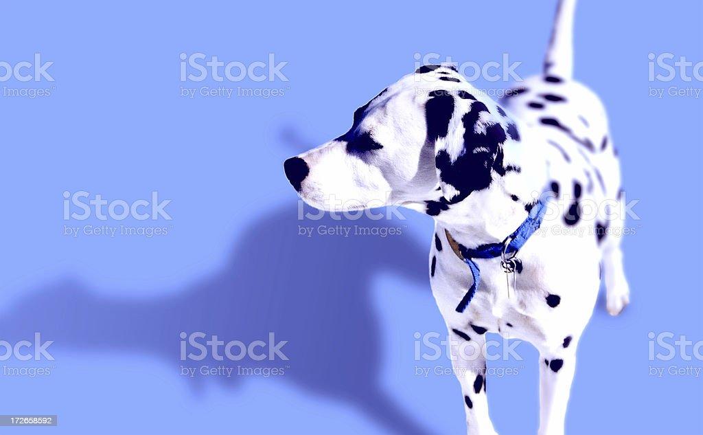 Peppa stock photo