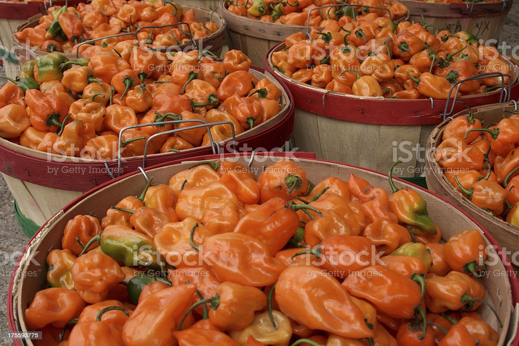 Pepper Harvest royalty-free stock photo