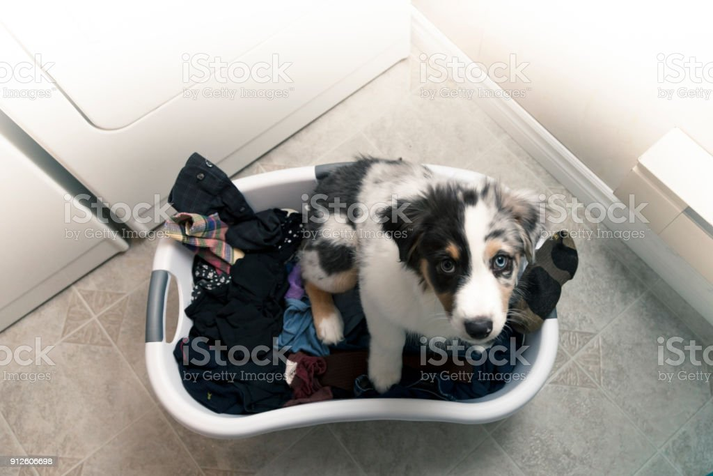 Pepper Laundry Day stock photo