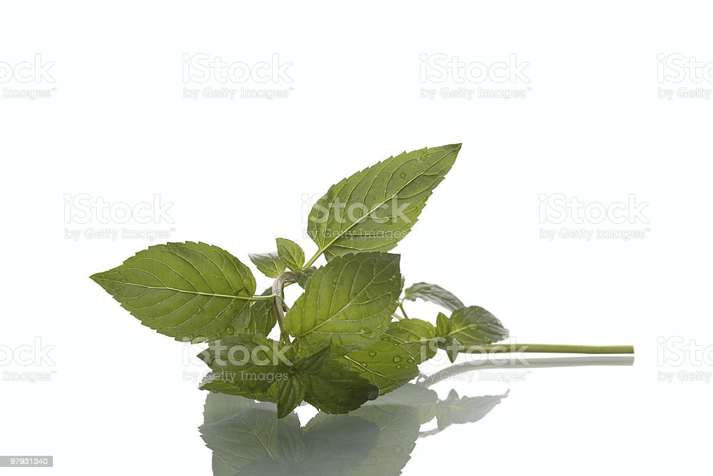 Peppermint Leaf royalty-free stock photo