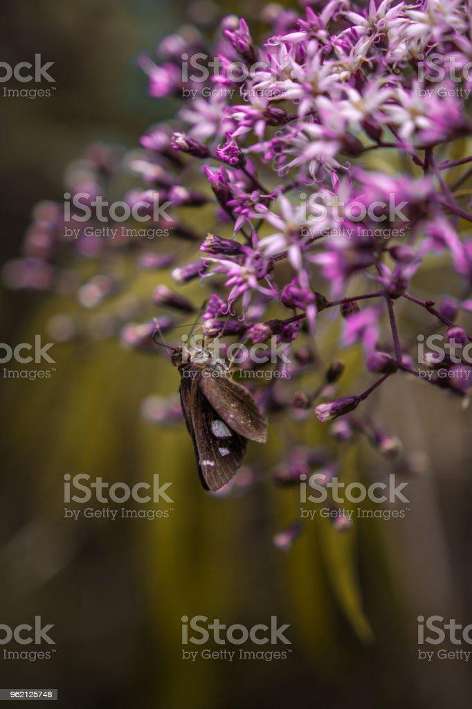 Pequena mariposa marrom sobre flores rosas com o fundo desfocado stock photo