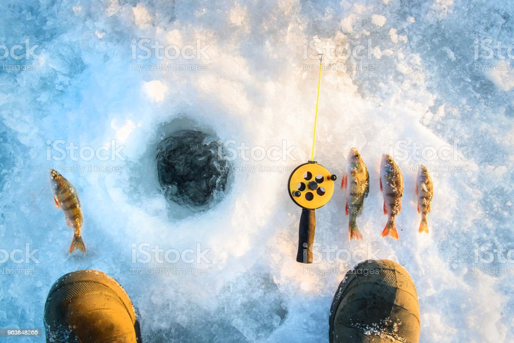 Perch fish with rod near ice hotel. Winter fishing theme. Fisherman point of view. - Royalty-free Catch of Fish Stock Photo