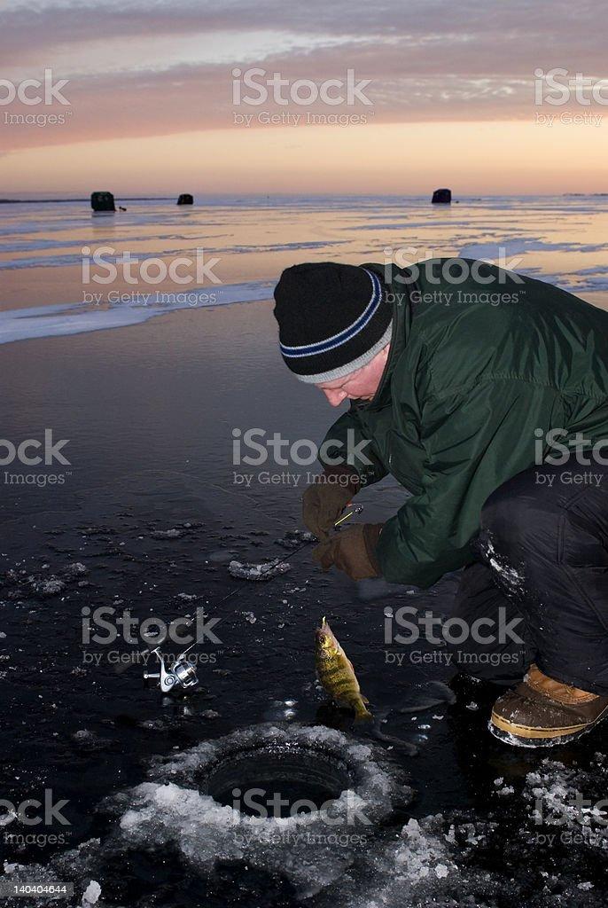 Perch Ice Fisherman royalty-free stock photo