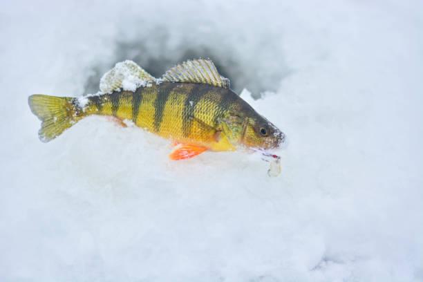 barsch eisfischen - crappie angeln stock-fotos und bilder