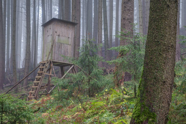 Perch in the foggy forest stock photo