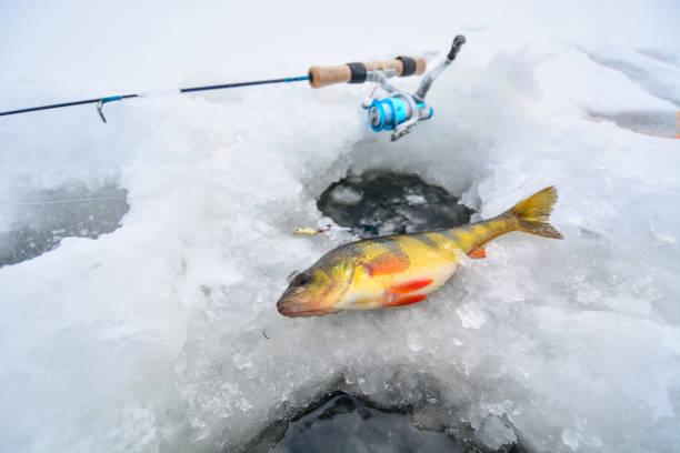 barsch auf eis veröffentlicht - crappie angeln stock-fotos und bilder