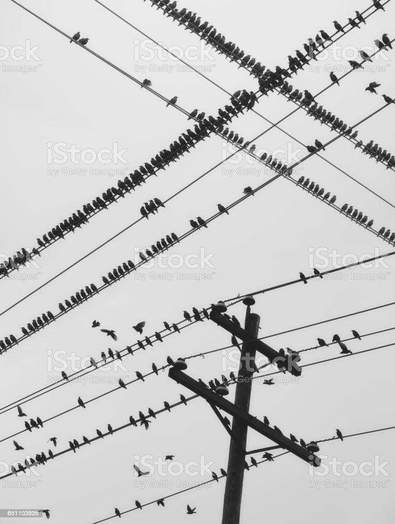 Perched Murmuration stock photo
