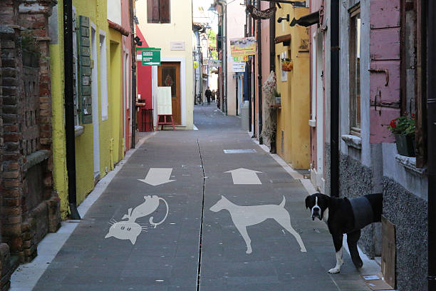 Percorso pedonale con indicazioni per cani e gatti Percorso pedonale con indicazioni per cani e gatti percorso stock pictures, royalty-free photos & images