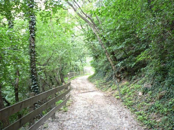 Percorso sterrato Una via sterrata che si perde nella foresta percorso stock pictures, royalty-free photos & images