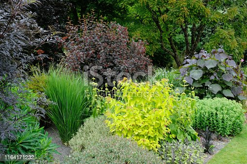 Mixed foliage colours in a perennial flower bed with Hylotelephium