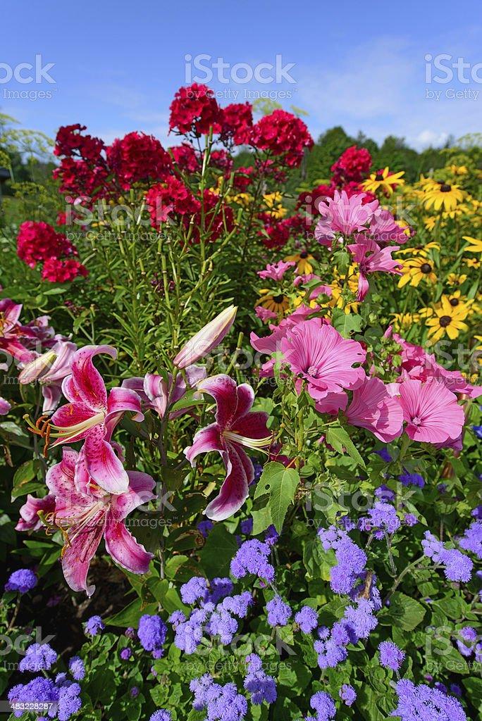 Perennial Flowers - Vertical stock photo