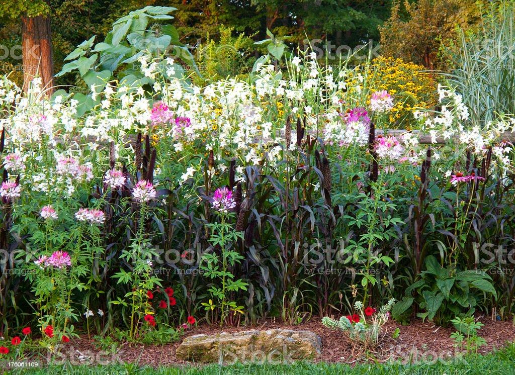 Perennial Garden royalty-free stock photo