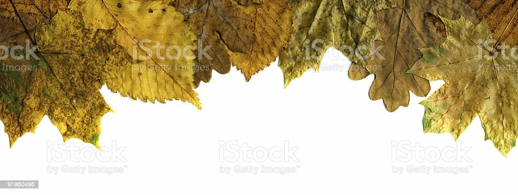 perfect autumnal leaf for frame stock photo