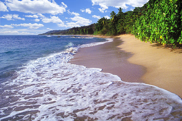Perfect Beach Day Hide tides laps at the base of tropical forest north of Santa Teresa, Costa Rica. nicoya peninsula stock pictures, royalty-free photos & images