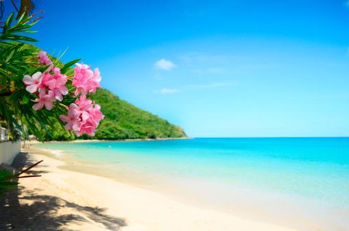 perfect beach and frangipani pink flowers idyll