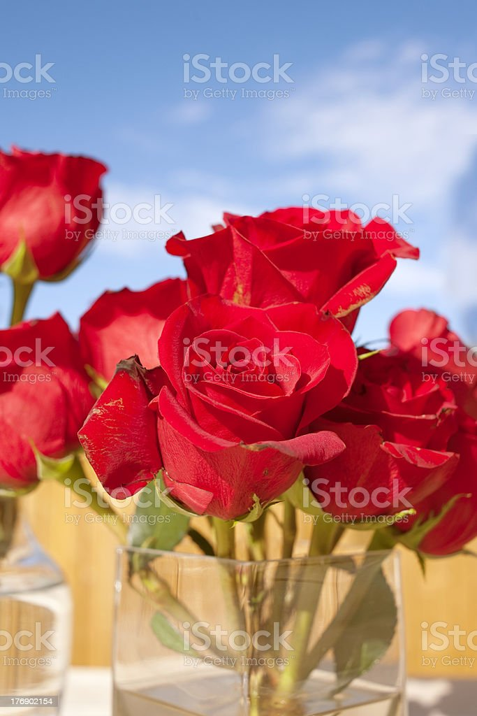 Perfect Bouquet of Roses, Blue Sky, Vase stock photo