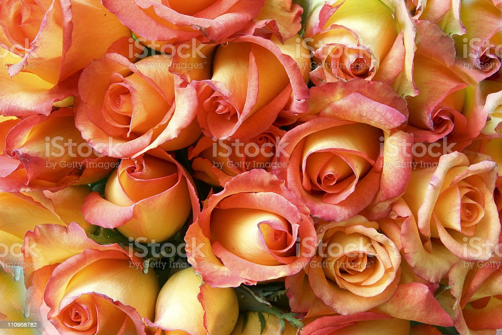 Perfect bouquet royalty-free stock photo